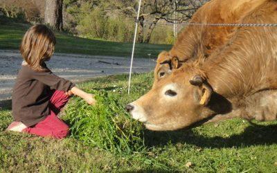Mise à l'herbe 2009