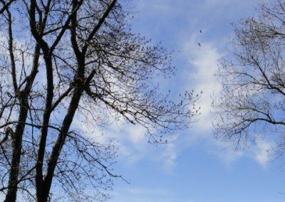 vautours cornadis